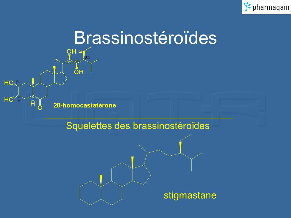 Brassinostéroïdes 2 3 24 Squelettes des brassinostéroïdes stigmastane