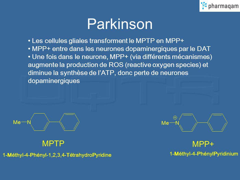 Parkinson Les cellules gliales transforment le MPTP en MPP+ MPP+ entre dans les neurones dopaminergiques par le DAT Une fois dans le neurone, MPP+ (via différents mécanismes) augmente la production de ROS (reactive oxygen species) et diminue la synthèse de lATP, donc perte de neurones dopaminergiques MPTP 1-Méthyl-4-Phényl-1,2,3,4-TétrahydroPyridine MPP+ 1-Méthyl-4-PhénylPyridinium