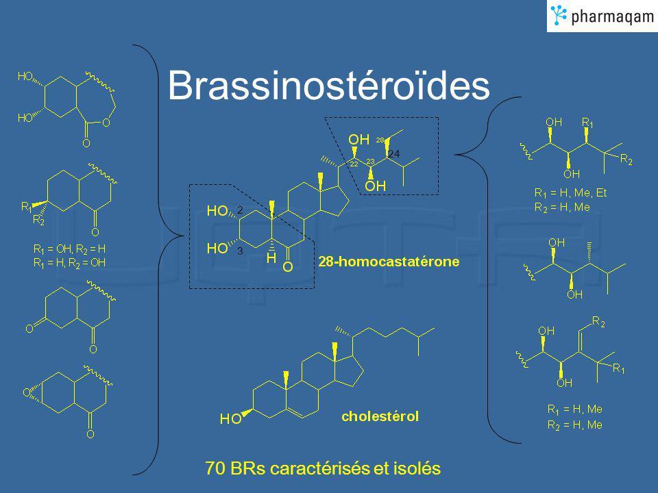 Brassinostéroïdes 2 3 24 70 BRs caractérisés et isolés