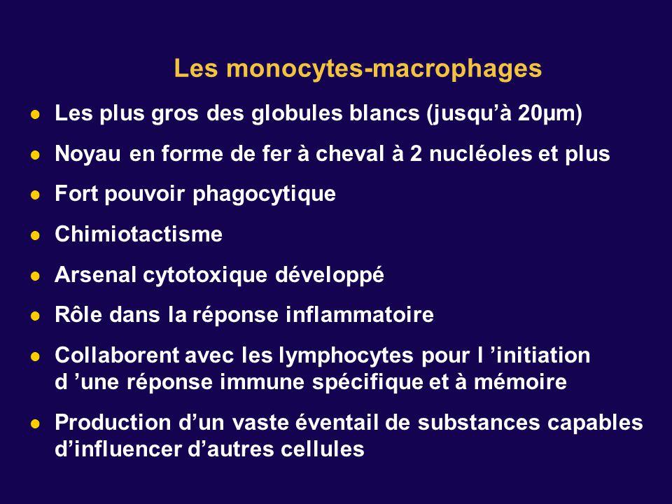 Les plus gros des globules blancs (jusquà 20µm) Noyau en forme de fer à cheval à 2 nucléoles et plus Fort pouvoir phagocytique Chimiotactisme Arsenal cytotoxique développé Rôle dans la réponse inflammatoire Collaborent avec les lymphocytes pour l initiation d une réponse immune spécifique et à mémoire Production dun vaste éventail de substances capables dinfluencer dautres cellules Les monocytes-macrophages