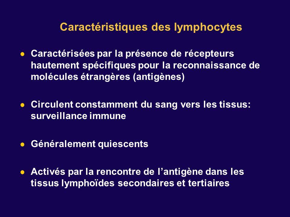 Caractéristiques des lymphocytes Caractérisées par la présence de récepteurs hautement spécifiques pour la reconnaissance de molécules étrangères (antigènes) Circulent constamment du sang vers les tissus: surveillance immune Généralement quiescents Activés par la rencontre de lantigène dans les tissus lymphoïdes secondaires et tertiaires