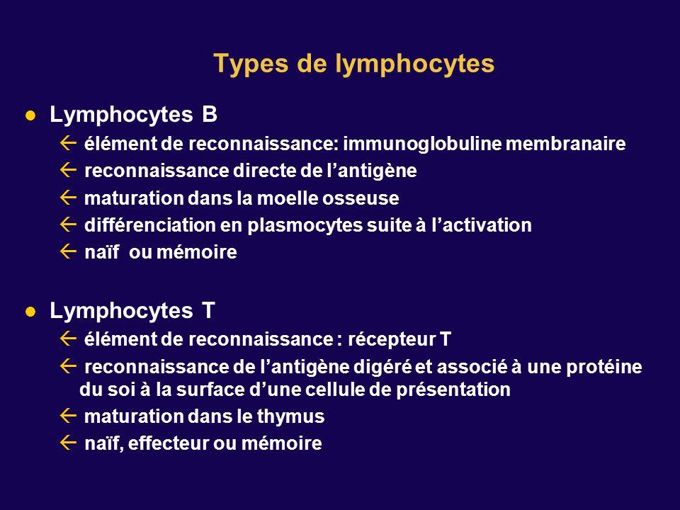 Types de lymphocytes Lymphocytes B élément de reconnaissance: immunoglobuline membranaire reconnaissance directe de lantigène maturation dans la moelle osseuse différenciation en plasmocytes suite à lactivation naïf ou mémoire Lymphocytes T élément de reconnaissance : récepteur T reconnaissance de lantigène digéré et associé à une protéine du soi à la surface dune cellule de présentation maturation dans le thymus naïf, effecteur ou mémoire