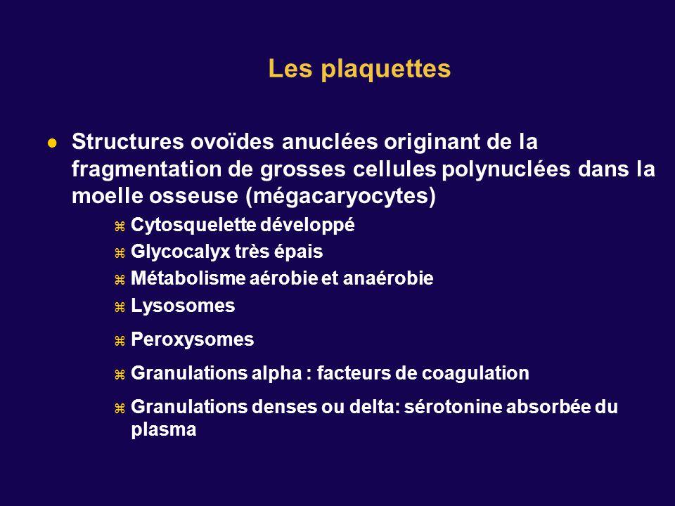 Structures ovoïdes anuclées originant de la fragmentation de grosses cellules polynuclées dans la moelle osseuse (mégacaryocytes) Cytosquelette développé Glycocalyx très épais Métabolisme aérobie et anaérobie Lysosomes Peroxysomes Granulations alpha : facteurs de coagulation Granulations denses ou delta: sérotonine absorbée du plasma Les plaquettes