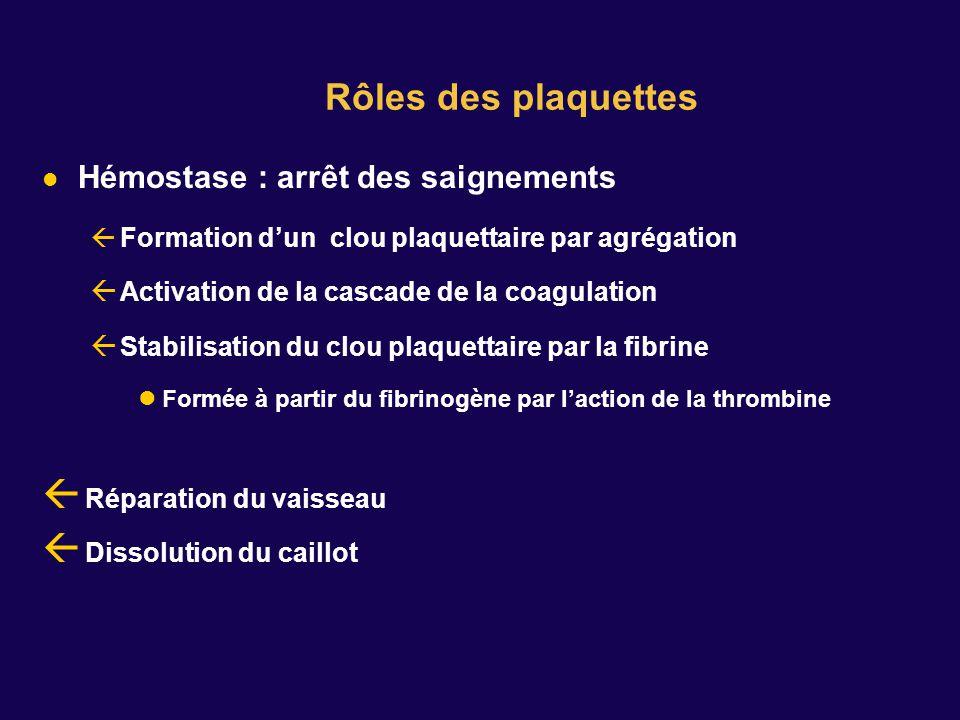 Hémostase : arrêt des saignements Formation dun clou plaquettaire par agrégation Activation de la cascade de la coagulation Stabilisation du clou plaquettaire par la fibrine Formée à partir du fibrinogène par laction de la thrombine Réparation du vaisseau Dissolution du caillot Rôles des plaquettes
