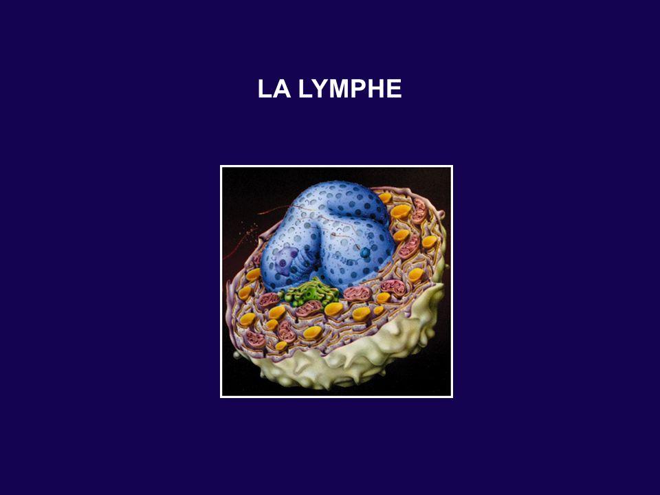 LA LYMPHE