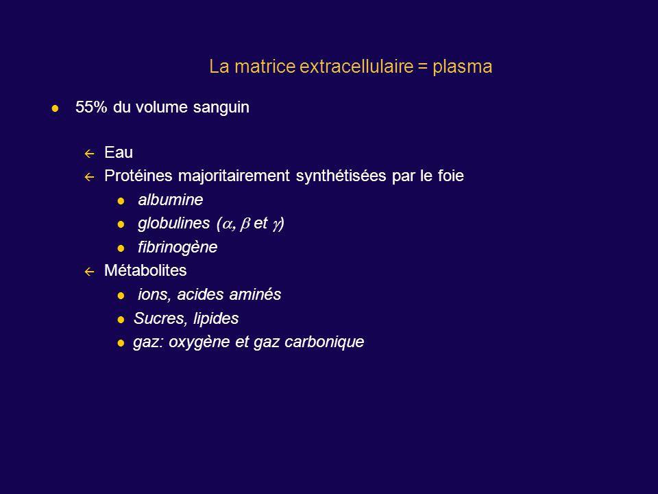 55% du volume sanguin Eau Protéines majoritairement synthétisées par le foie albumine globulines ( et ) fibrinogène Métabolites ions, acides aminés Su
