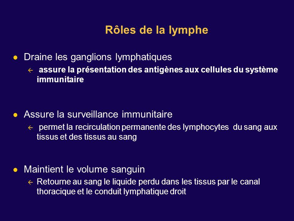 Draine les ganglions lymphatiques assure la présentation des antigènes aux cellules du système immunitaire Assure la surveillance immunitaire permet l