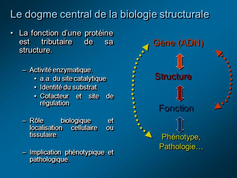 Le dogme central de la biologie structurale La fonction dune protéine est tributaire de sa structure.La fonction dune protéine est tributaire de sa structure.