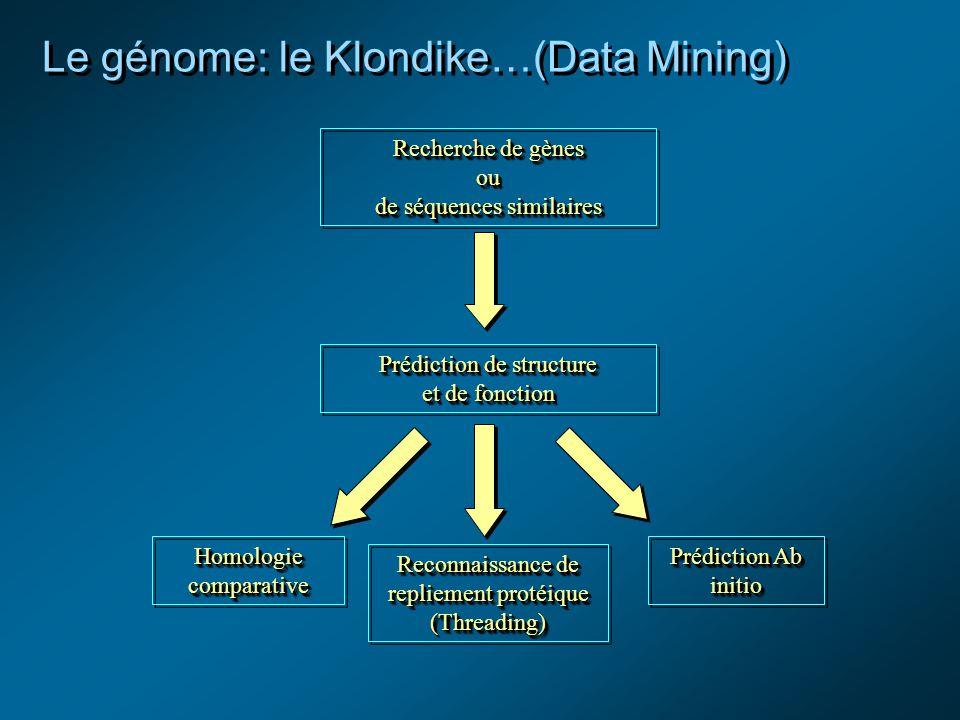 Le génome: le Klondike…(Data Mining) Recherche de gènes ou de séquences similaires Recherche de gènes ou de séquences similaires Prédiction de structure et de fonction Prédiction de structure et de fonction Homologie comparative Reconnaissance de repliement protéique (Threading) Prédiction Ab initio