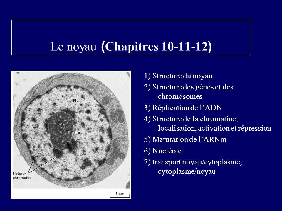 Le noyau ( Chapitres 10-11-12 ) 1) Structure du noyau 2) Structure des gènes et des chromosomes 3) Réplication de lADN 4) Structure de la chromatine,