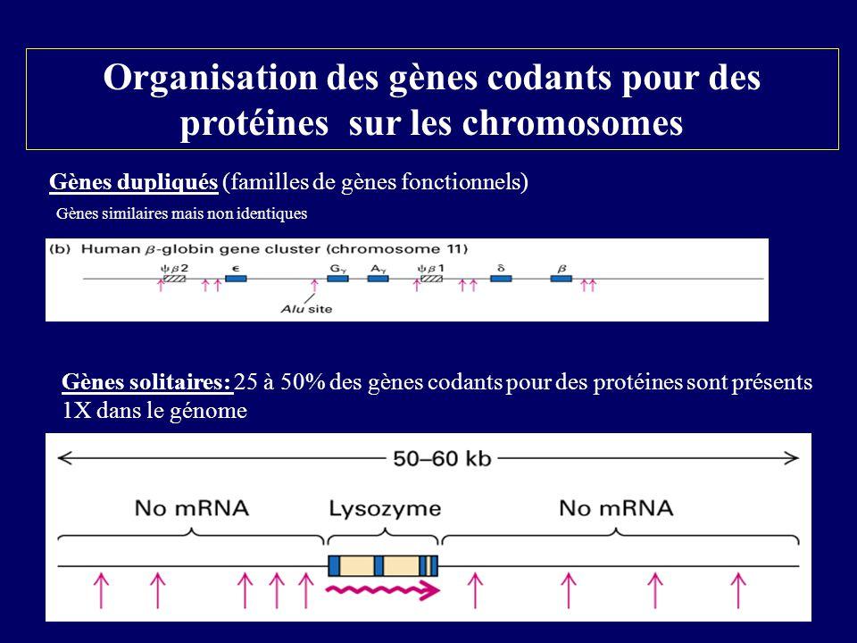 Gènes dupliqués (familles de gènes fonctionnels) Gènes solitaires: 25 à 50% des gènes codants pour des protéines sont présents 1X dans le génome Organ