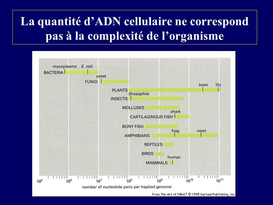 La quantité dADN cellulaire ne correspond pas à la complexité de lorganisme