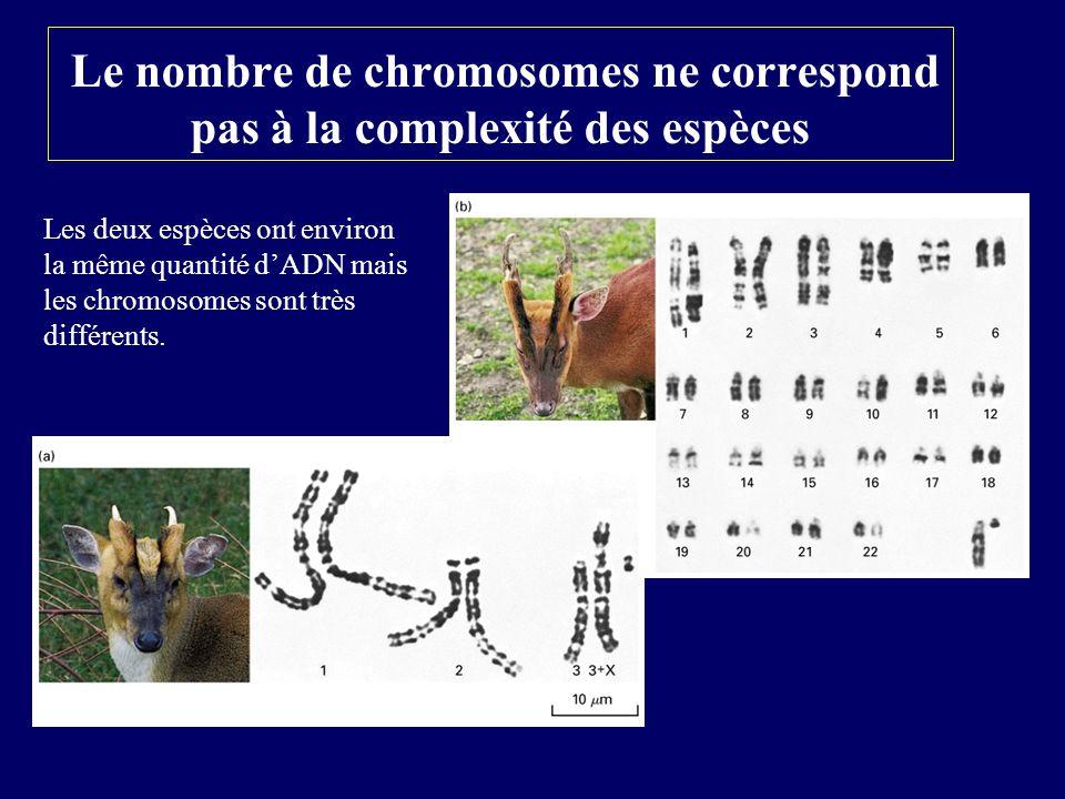 Le nombre de chromosomes ne correspond pas à la complexité des espèces Les deux espèces ont environ la même quantité dADN mais les chromosomes sont tr