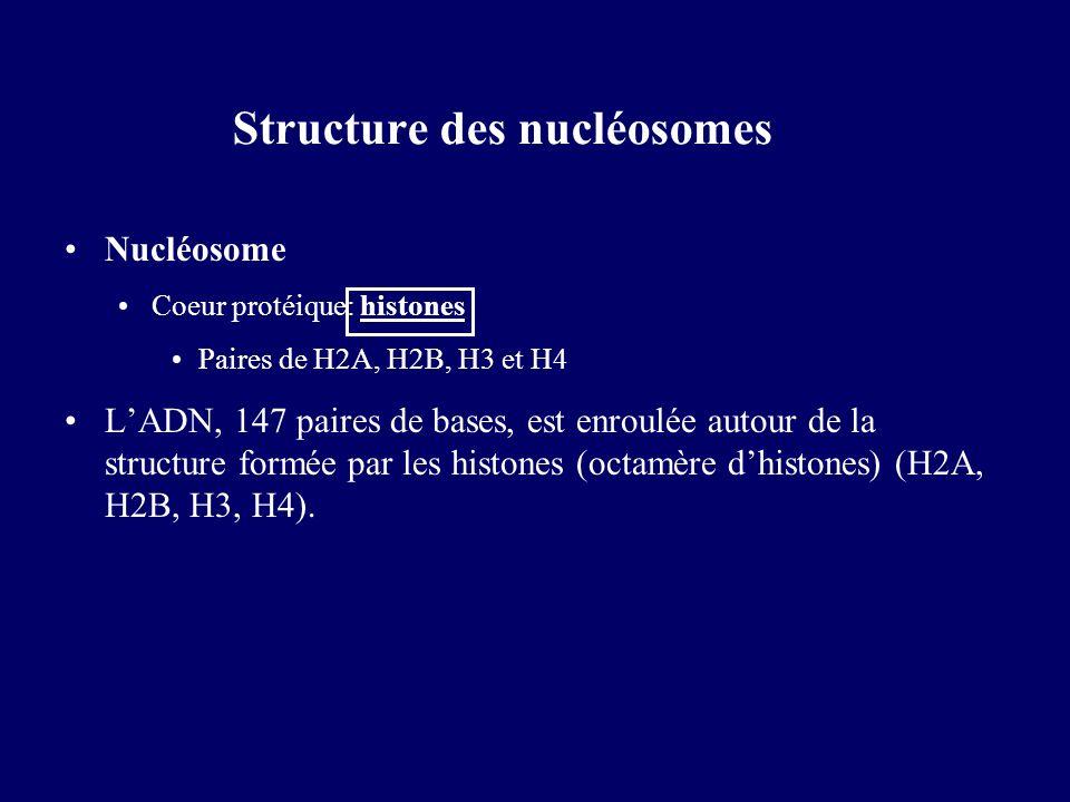 Structure des nucléosomes Nucléosome Coeur protéique: histones Paires de H2A, H2B, H3 et H4 LADN, 147 paires de bases, est enroulée autour de la struc