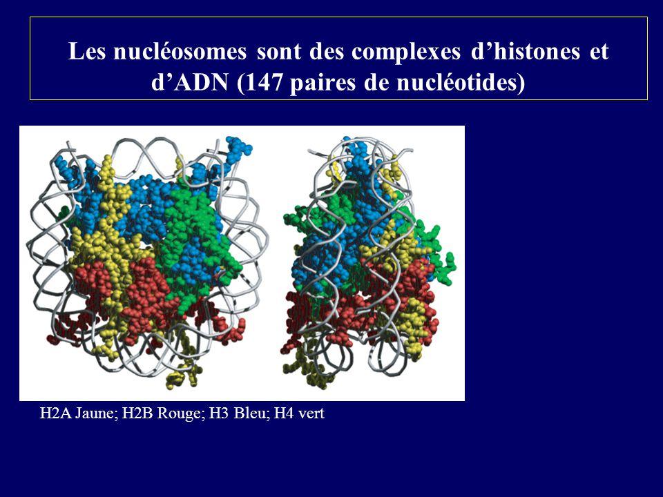 Les nucléosomes sont des complexes dhistones et dADN (147 paires de nucléotides) H2A Jaune; H2B Rouge; H3 Bleu; H4 vert
