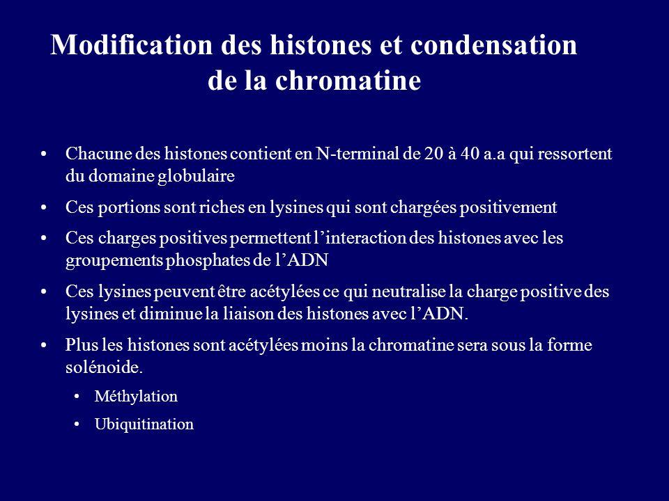 Modification des histones et condensation de la chromatine Chacune des histones contient en N-terminal de 20 à 40 a.a qui ressortent du domaine globul