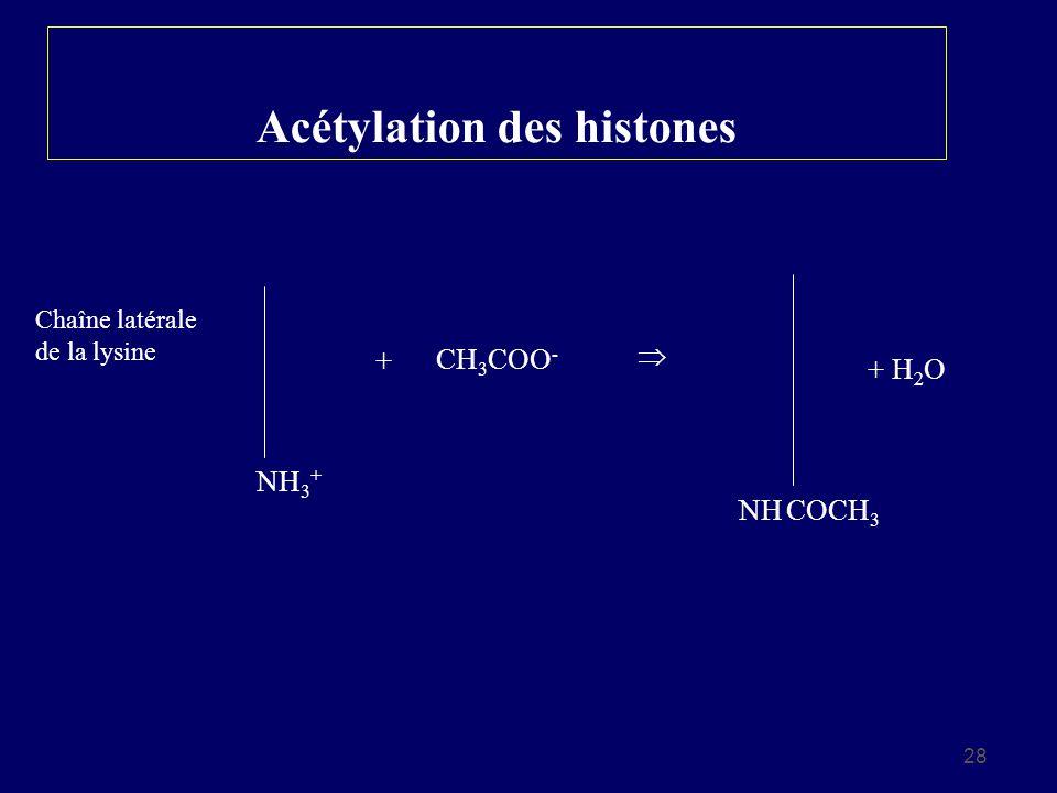 28 Acétylation des histones Chaîne latérale de la lysine NH 3 + + CH 3 COO - NH COCH 3 + H 2 O