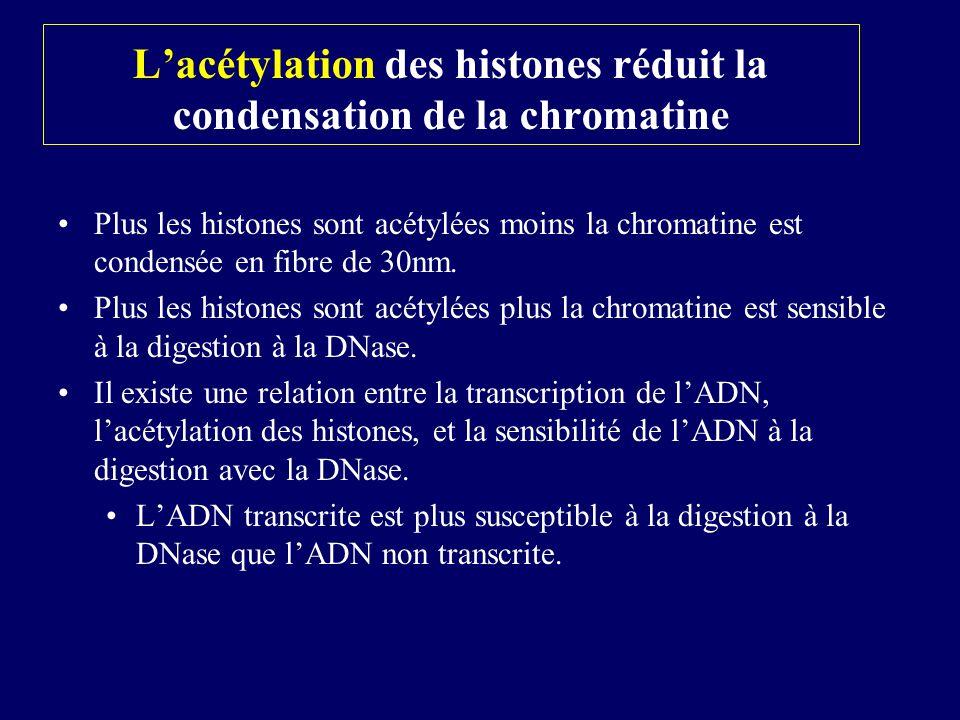 Plus les histones sont acétylées moins la chromatine est condensée en fibre de 30nm. Plus les histones sont acétylées plus la chromatine est sensible