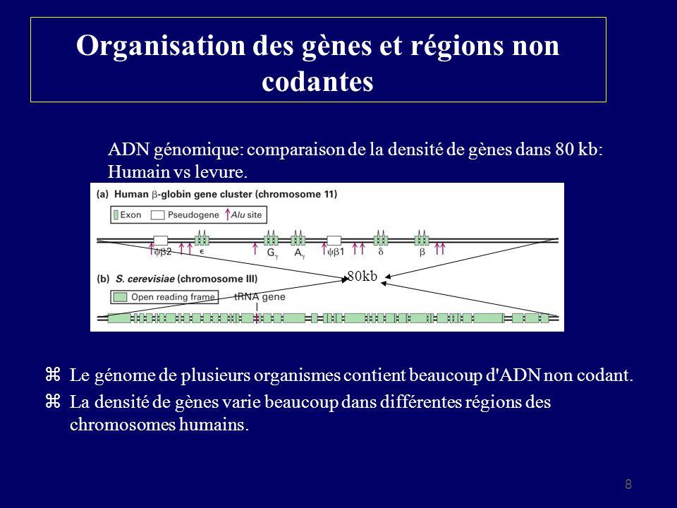 8 Organisation des gènes et régions non codantes z Le génome de plusieurs organismes contient beaucoup d'ADN non codant. z La densité de gènes varie b