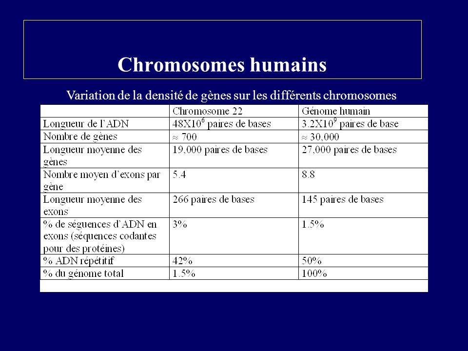 Gènes dupliqués (familles de gènes fonctionnels) Gènes solitaires: 25 à 50% des gènes codants pour des protéines sont présents 1X dans le génome Organisation des gènes codants pour des protéines sur les chromosomes Gènes similaires mais non identiques