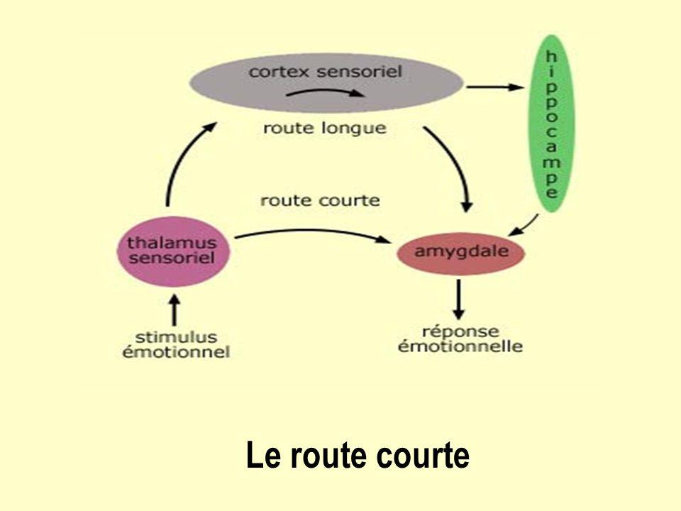 Le route courte