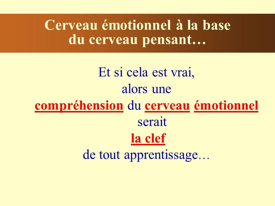 Cerveau émotionnel à la base du cerveau pensant… Et si cela est vrai, alors une compréhension du cerveau émotionnel serait la clef de tout apprentissage …
