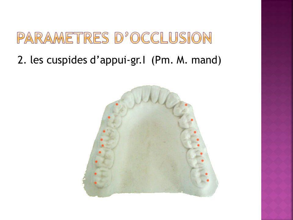 2. les cuspides dappui-gr.I (Pm. M. mand)