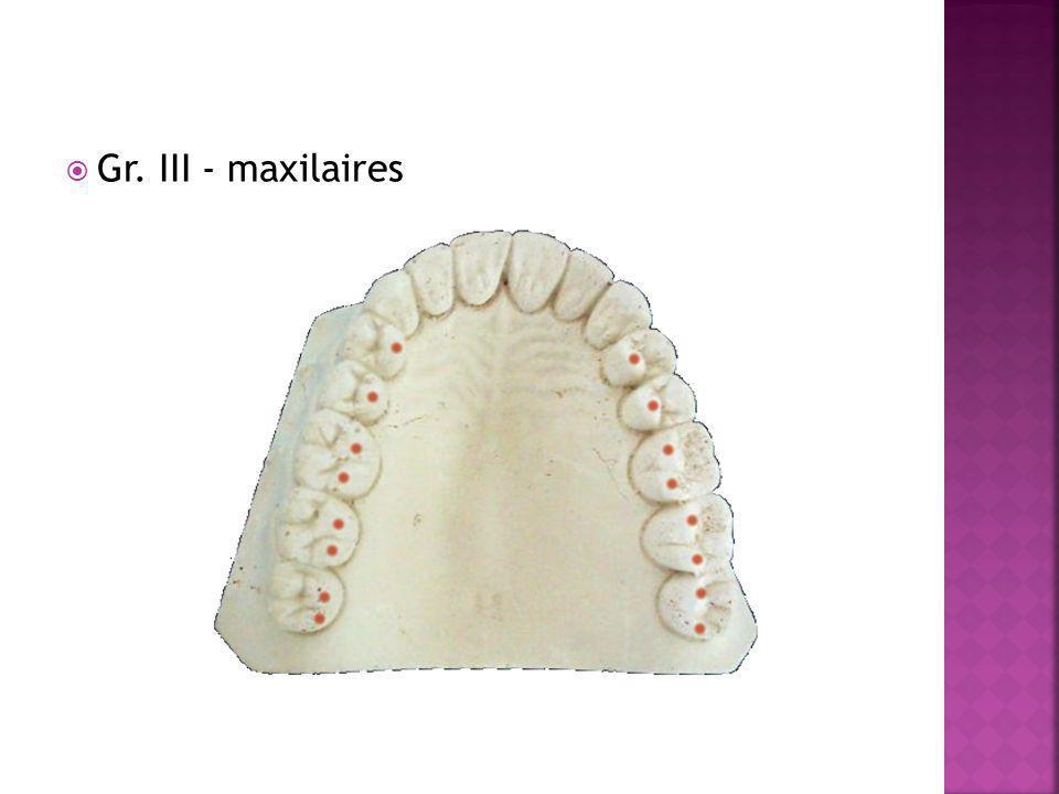 Gr. III - maxilaires
