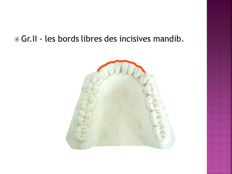Gr.II - les bords libres des incisives mandib.