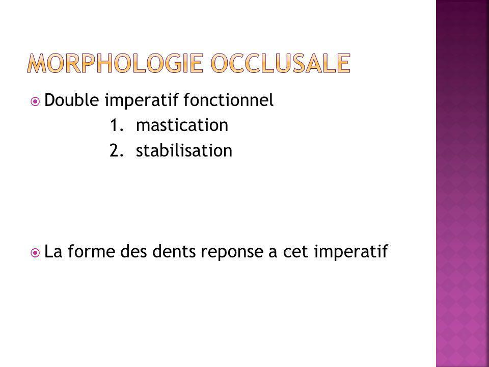 Double imperatif fonctionnel 1. mastication 2.