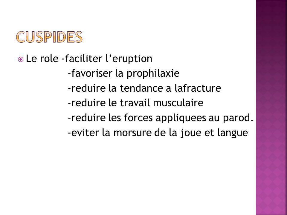 Le role -faciliter leruption -favoriser la prophilaxie -reduire la tendance a lafracture -reduire le travail musculaire -reduire les forces appliquees au parod.