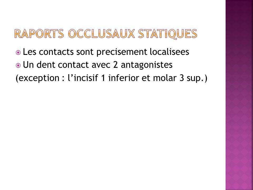 Les contacts sont precisement localisees Un dent contact avec 2 antagonistes (exception : lincisif 1 inferior et molar 3 sup.)