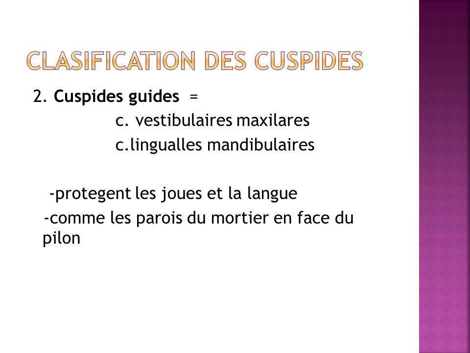 2. Cuspides guides = c.