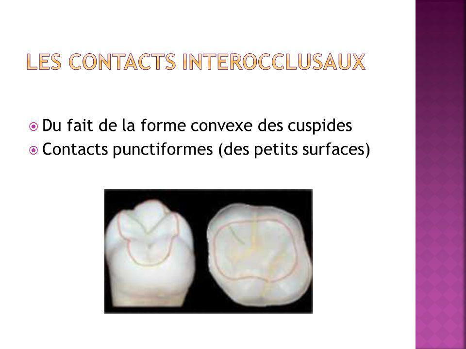 Du fait de la forme convexe des cuspides Contacts punctiformes (des petits surfaces)