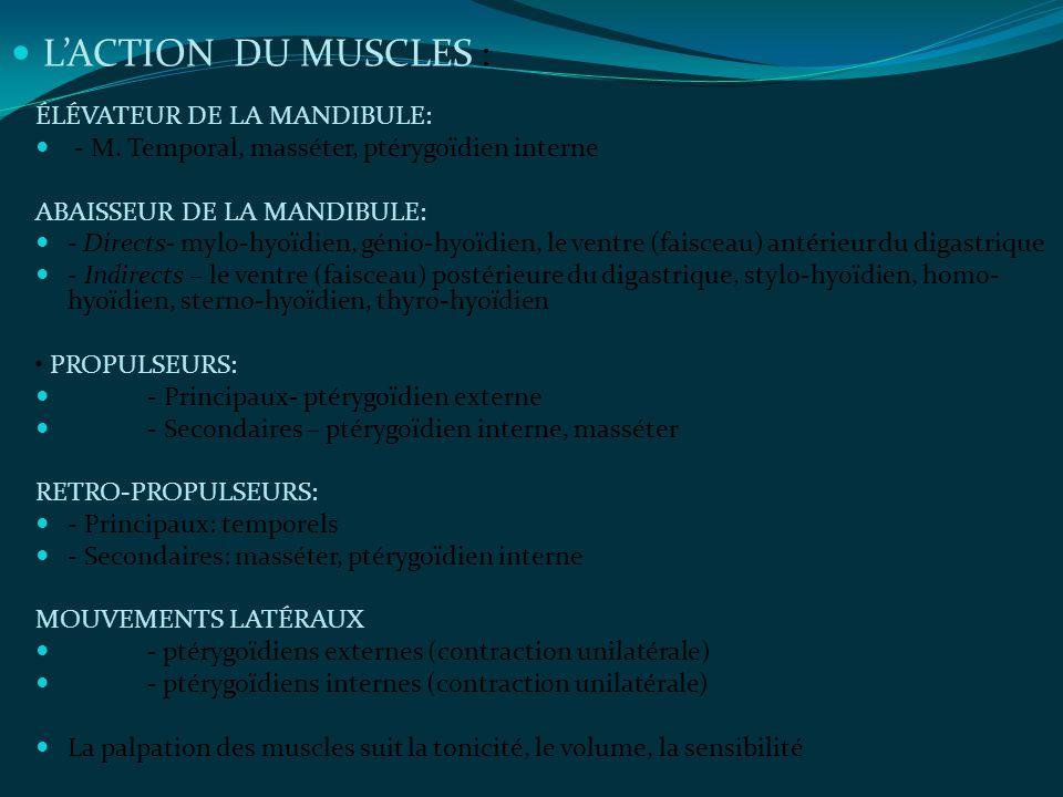 ÉLÉVATEUR DE LA MANDIBULE: - M. Temporal, masséter, ptérygoïdien interne ABAISSEUR DE LA MANDIBULE: - Directs- mylo-hyoïdien, génio-hyoïdien, le ventr