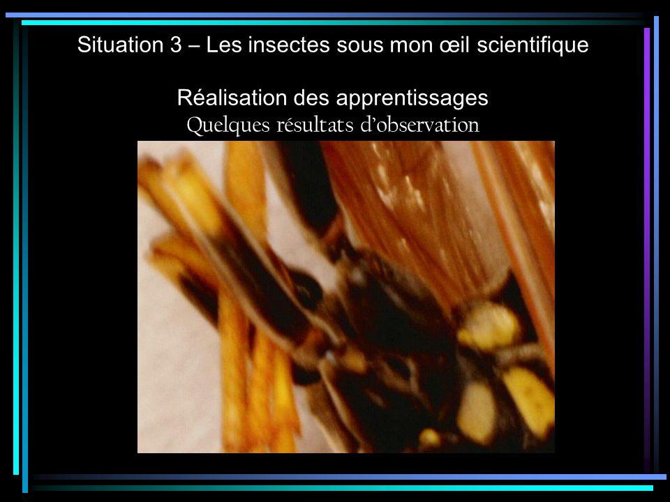 Situation 3 – Les insectes sous mon œil scientifique Réalisation des apprentissages Quelques résultats dobservation