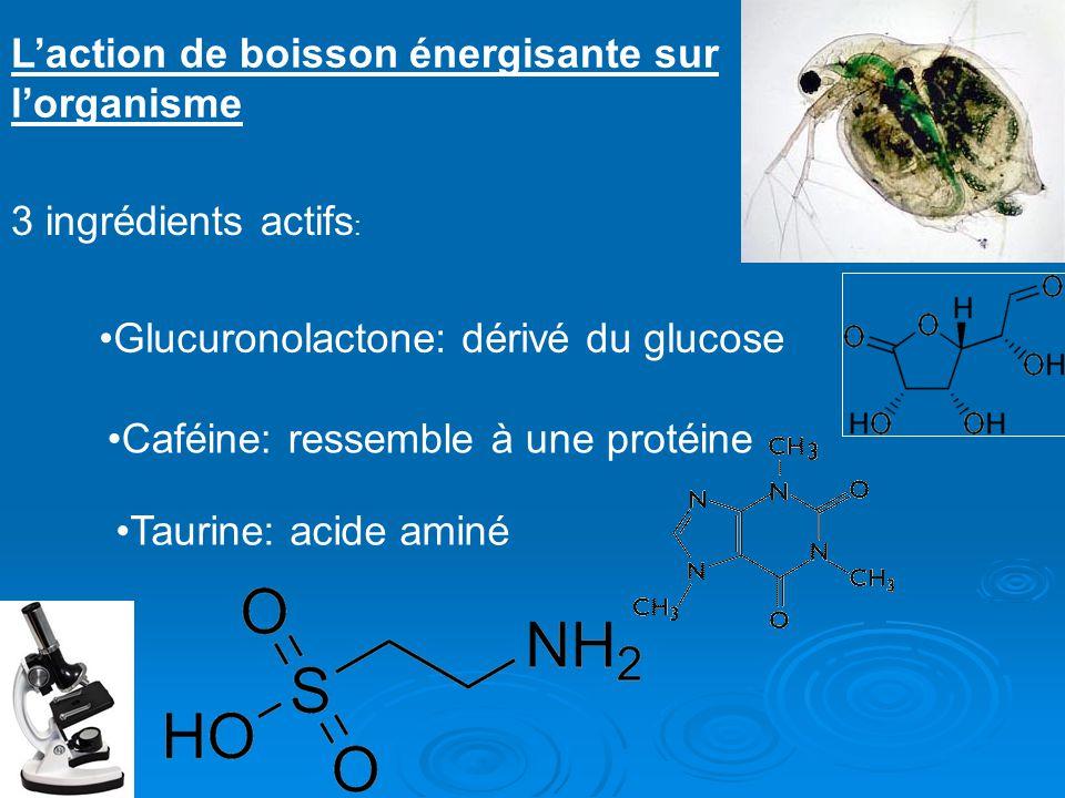 Laction de boisson énergisante sur lorganisme 3 ingrédients actifs : Glucuronolactone: dérivé du glucose Caféine: ressemble à une protéine Taurine: ac
