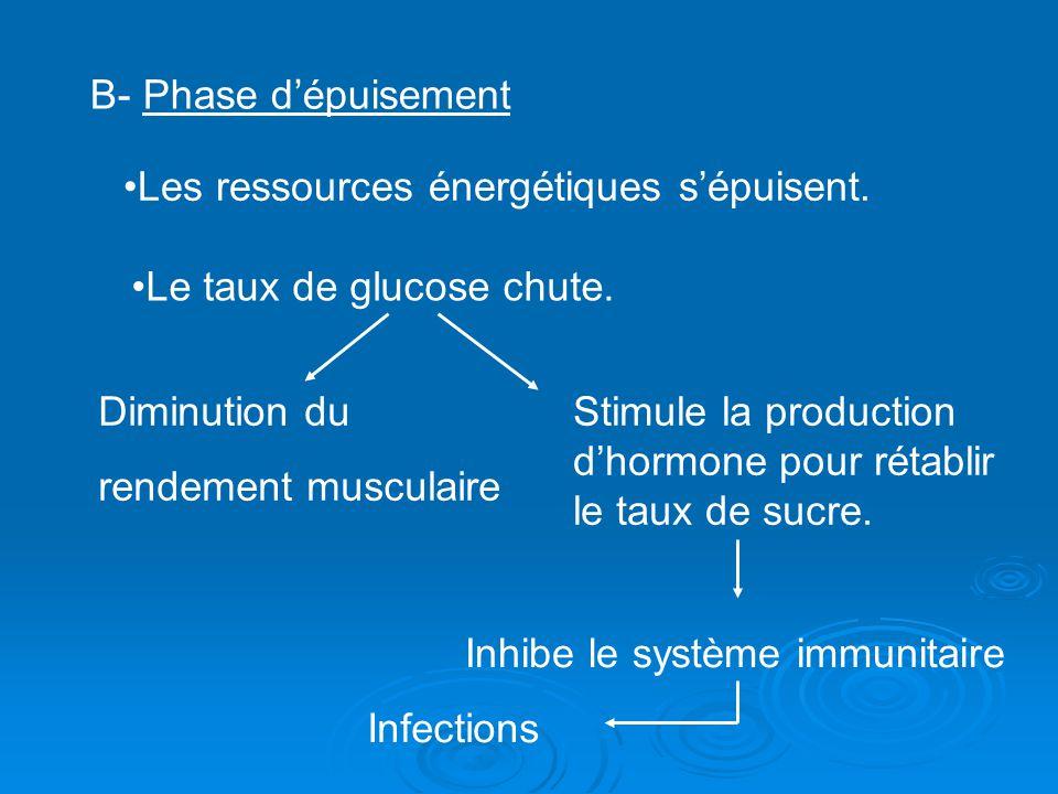 B- Phase dépuisement Les ressources énergétiques sépuisent. Le taux de glucose chute. Diminution du rendement musculaire Stimule la production dhormon