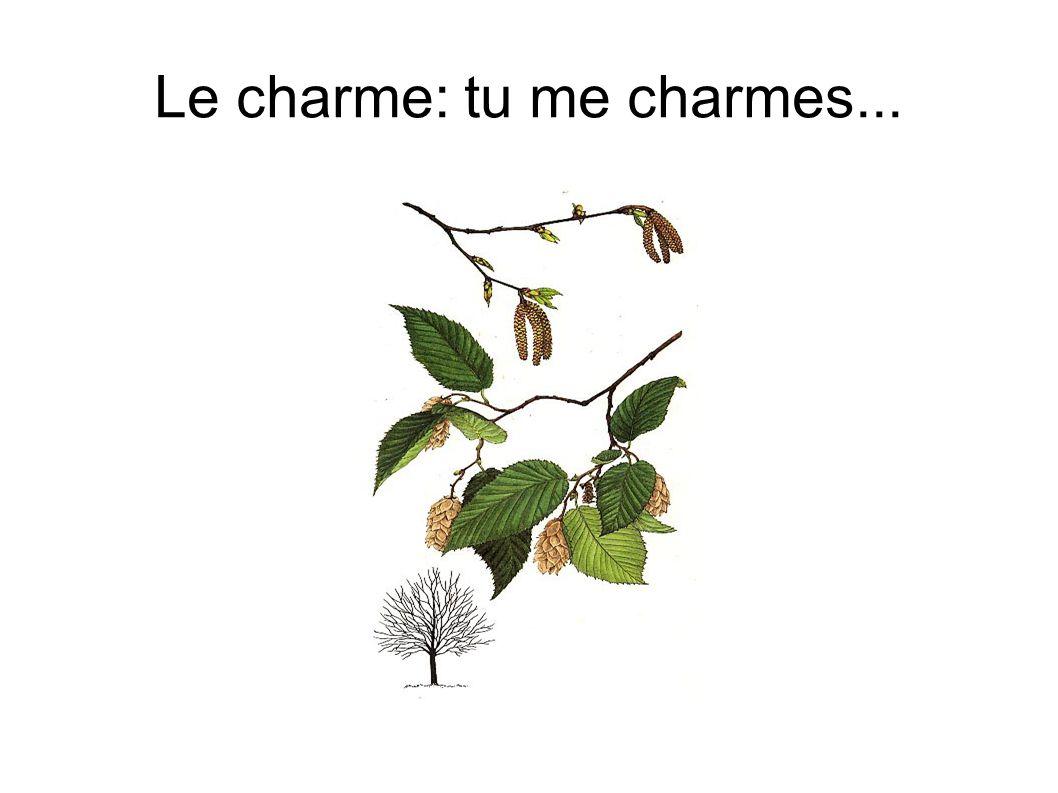 Le charme: tu me charmes...