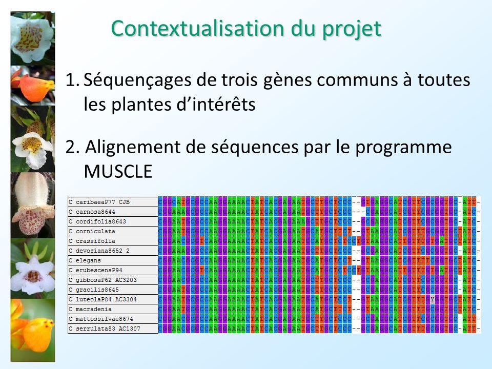 3.Estimation du nombre de substitutions par lignées et génération dun arbre phylogénétique moléculaire 4.Estimation dun taux de mutation propre à chaque espèce à laide dun modèle d autocorrélation de l évolution des taux de mutations arbre phylogénétique avec datation « relative » Contextualisation du projet
