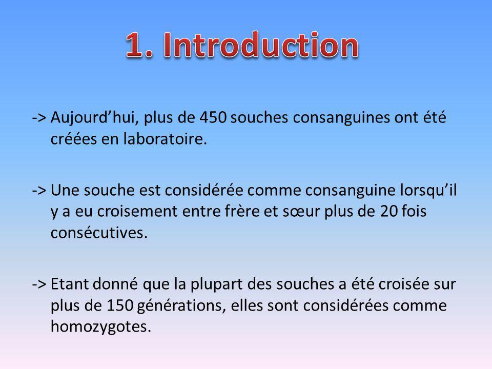 -> Aujourdhui, plus de 450 souches consanguines ont été créées en laboratoire. -> Une souche est considérée comme consanguine lorsquil y a eu croiseme