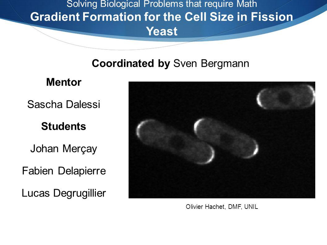 Contrôle de lentrée en mitose de la levure Pom1 forme un gradient de concentration sur la membrane Inhibition de Cdr2 par Pom1 Autophosphorylations induisent un détachement de la protéine Etablissement dun cycle Contexte SG Matin & M Berthelot-Gorsjean Nature 459 (2009) Olivier Hachet & al.