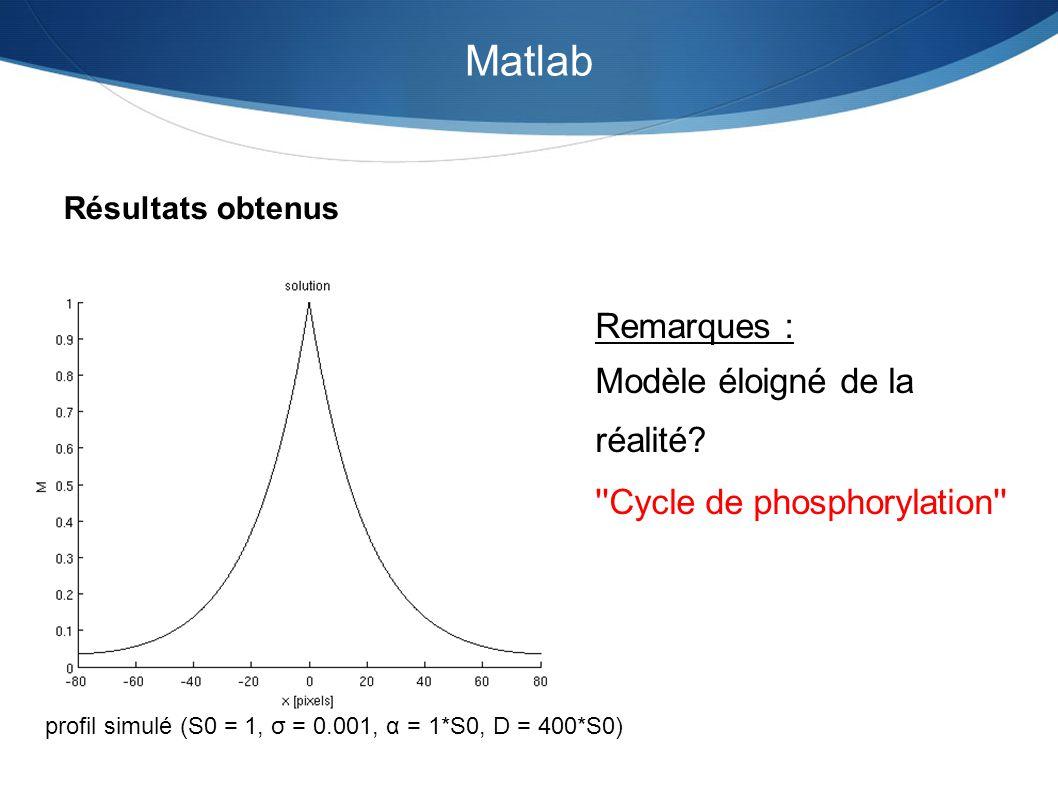 Matlab Résultats obtenus profil simulé (S0 = 1, σ = 0.001, α = 1*S0, D = 400*S0) Remarques : Modèle éloigné de la réalité? ''Cycle de phosphorylation'