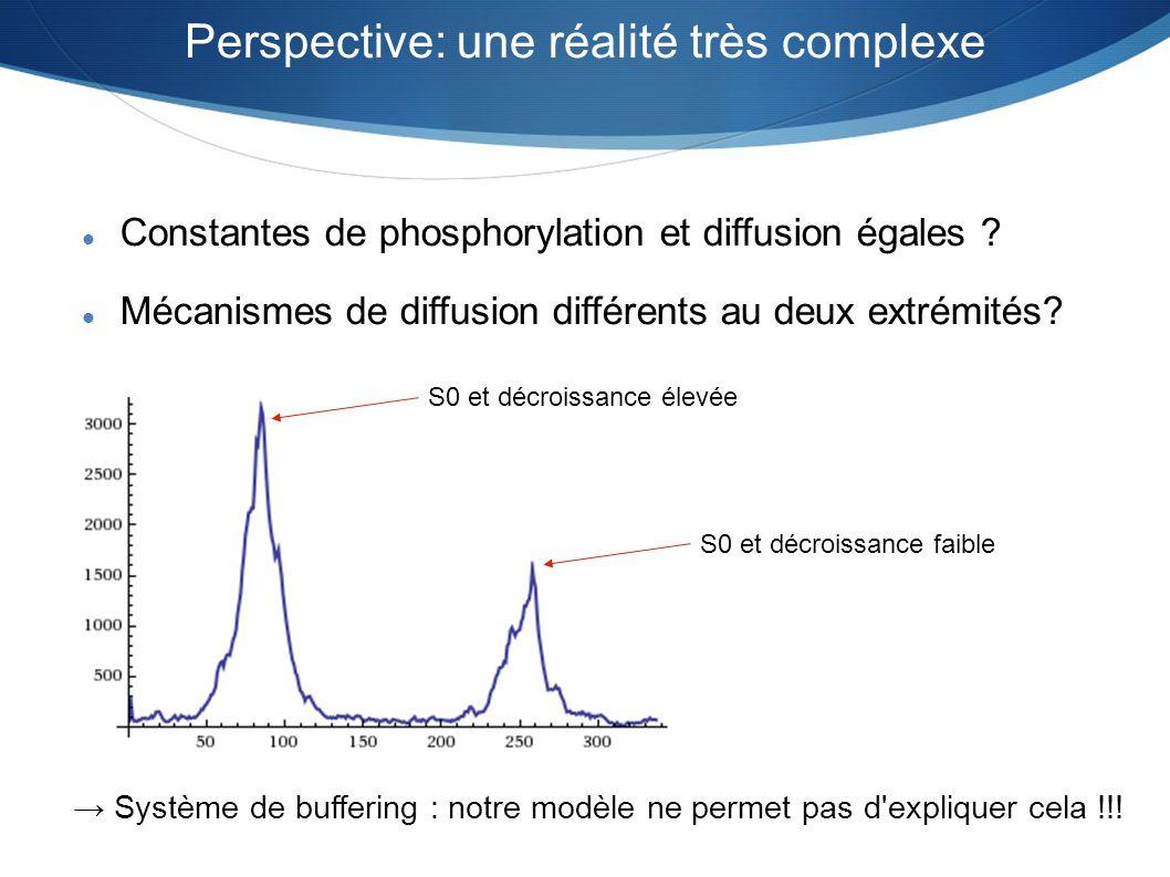 Perspective: une réalité très complexe Constantes de phosphorylation et diffusion égales ? Mécanismes de diffusion différents au deux extrémités? S0 e