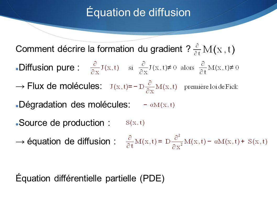 Équation de diffusion Comment décrire la formation du gradient ? Diffusion pure : Flux de molécules: Dégradation des molécules: Source de production :