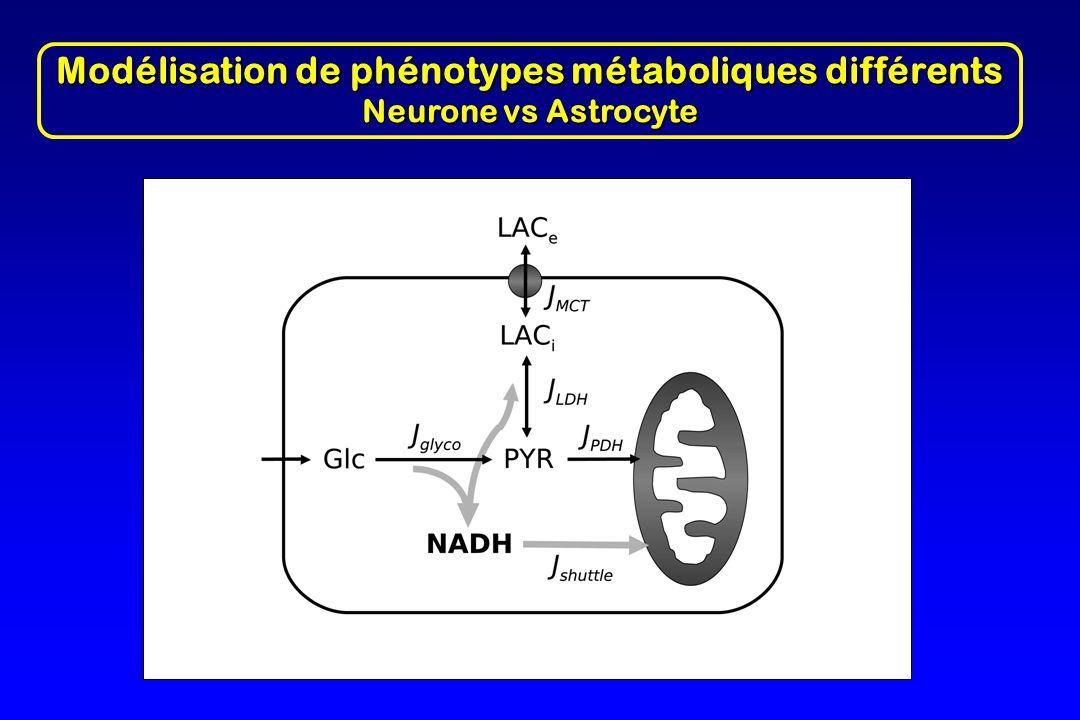 Modélisation de phénotypes métaboliques différents Neurone vs Astrocyte
