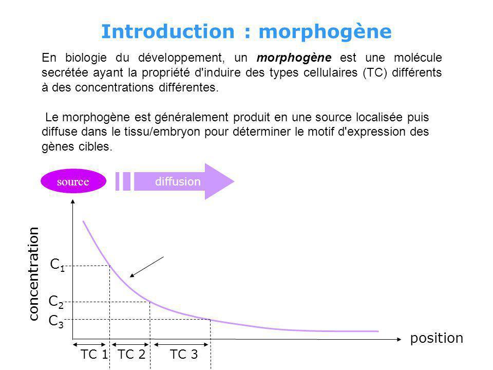 Introduction : morphogène En biologie du développement, un morphogène est une molécule secrétée ayant la propriété d induire des types cellulaires (TC) différents à des concentrations différentes.