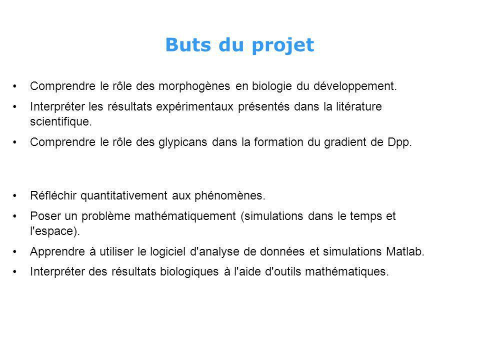 Buts du projet Comprendre le rôle des morphogènes en biologie du développement.
