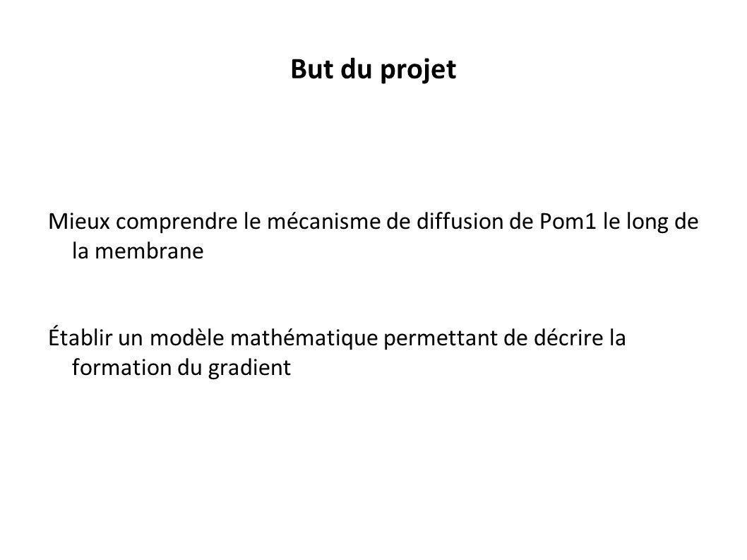 But du projet Mieux comprendre le mécanisme de diffusion de Pom1 le long de la membrane Établir un modèle mathématique permettant de décrire la format