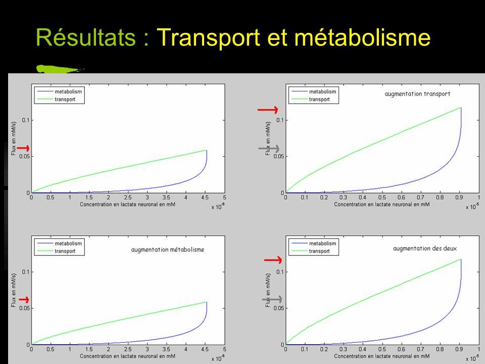 Résultats : Transport et métabolisme